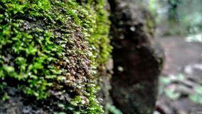 The Green Rock Lichens stock images
