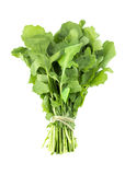 Green Rocket or Roquette leaves Stock Images