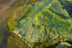 Green rocks Stock Images