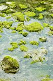 Green Rocks. Moss covered rocks in a river Stock Photo