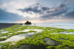 Green rocks beach at Bali, Indonesia. Stock Photography