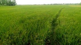 Green field crop stock photos