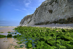 Green rocks on sea coast near Wissant city, France. Stock Images