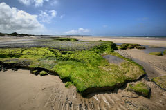 Green rocks on sea coast near Wissant city, France. Royalty Free Stock Photo