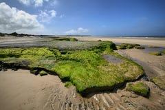 Green rocks on sea coast near Wissant city, France. Royalty Free Stock Photo