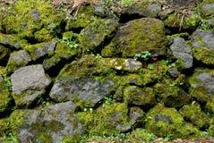 Green Rocks royalty free stock photos