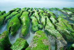 Green Rocky Seacoast Royalty Free Stock Photo