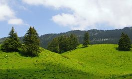 Green rolling hills. Pasture on rolling hills in chartreuse parc in france Royalty Free Stock Images
