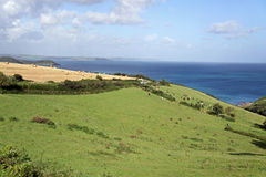 Green rolling hills, blue sea and cows Royalty Free Stock Image