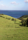 Green rolling hills, blue sea and cows Stock Photography