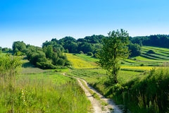 Green rolling hills in Roztocze,Poland Stock Images