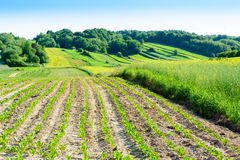 Green rolling hills in Roztocze,Poland Stock Image