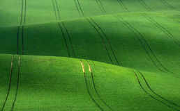 Green rolling hills of wheat that resemble corduroy with lines stretching into the distance. stock photos