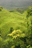 Green rolling landscape royalty free stock images
