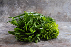 Green romaine lettuce Stock Photos