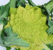Green Romanesco Stock Photos