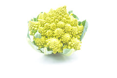 Green  romanesco cabbage isolated on white background Royalty Free Stock Image