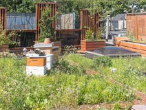 Green Roof with beehive Royalty Free Stock Photos