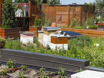 Green Roof with beehive Stock Images
