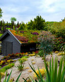 Green roof. A garden shed covered with a lovely green roof with lots of diverse types of plants Stock Image