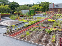 Green Roof. Rooftop garden in urban setting Stock Image