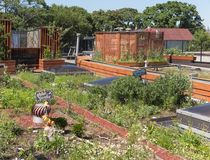 Green Roof Royalty Free Stock Images