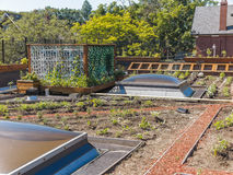 Green Roof Stock Photography