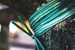 Green Rope Tied on Tree Stock Image