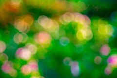 Green  rose Bokeh background,Abstract backgrounds. Nobody, blurred. Summer Stock Photography