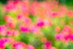 Green  rose Bokeh background,Abstract backgrounds. Nobody, blurred. Summer Stock Image