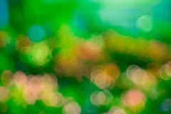Green  rose Bokeh background,Abstract backgrounds. Nobody, blurred. Summer Royalty Free Stock Images