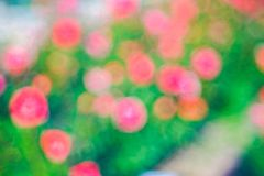 Green  roze Bokeh background,Abstract backgrounds. Nobody, blurred. Green rose Bokeh background,Abstract backgrounds. Nobody, blurred. summer Stock Images