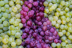 Green and rose grapes background. Fresh green and rose grapes Royalty Free Stock Photos