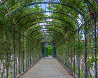 Rose tunnel, Garden of Schonbrunn, Vienna, Austria Stock Image