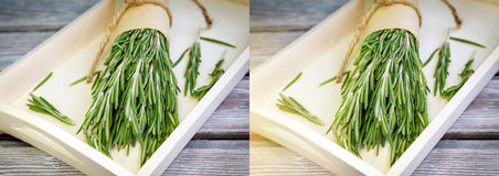 Green rosemary Stock Images