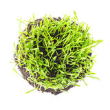 Green round lawn with fresh plants Royalty Free Stock Photography