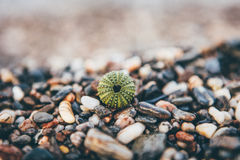 Green Round Plant Near Pebbles Single Focus Photography during Daytime Royalty Free Stock Image