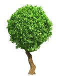 Green Round Tree Isolated on White Background. Royalty Free Stock Image