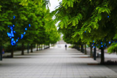 Green of the row of trees street. Green row of trees street and the sidewalk with led of the blue Royalty Free Stock Image