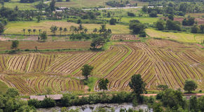 Green rows on field. Agricultural composition Stock Images