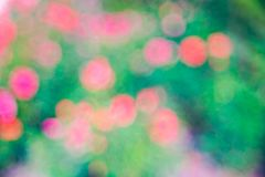 Green  roze Bokeh background,Abstract backgrounds. Nobody, blurred. Green rose Bokeh background,Abstract backgrounds. Nobody, blurred. summer Royalty Free Stock Photo
