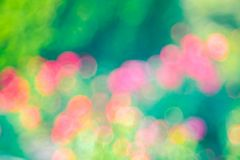 Green  roze Bokeh background,Abstract backgrounds. Nobody, blurred. Green rose Bokeh background,Abstract backgrounds. Nobody, blurred. summer Stock Photos