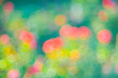 Green  roze Bokeh background,Abstract backgrounds. Nobody, blurred. Green rose Bokeh background,Abstract backgrounds. Nobody, blurred. summer Stock Photo