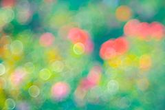 Green  roze Bokeh background,Abstract backgrounds. Nobody, blurred. Green rose Bokeh background,Abstract backgrounds. Nobody, blurred. summer Stock Photography
