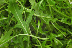 Green ruccola salad heap Stock Photography