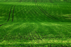 Green rug #2. Autumn in Germany. Coburg in Bavaria. Green fields Royalty Free Stock Photo