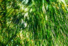 Green Running Water. Closeup Photo Background Royalty Free Stock Images