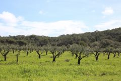 The green and rural hinterland of the Porquerolles Island royalty free stock photography