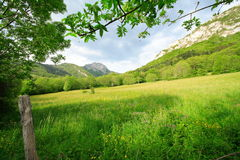 Green rural place to rest. Green place to rest in chartreuse (france) during the spring season Royalty Free Stock Image