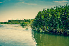 Green rushes by the lake Royalty Free Stock Images